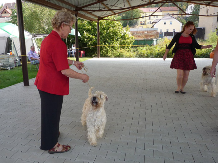 Ch. Goldie Wheaten Lulaby